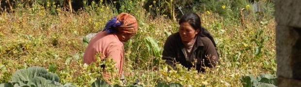 Letzte Tage in der Khumbu Region
