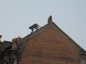 Auf den Dächern Kathmandus