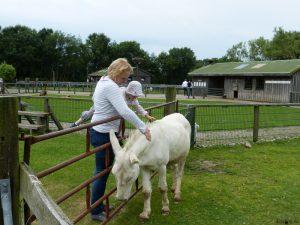 Weisser Esel
