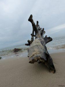 Baum am Strand